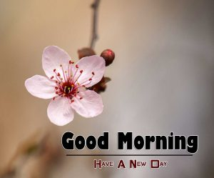 Best Good Morning Wallpaper Images 10