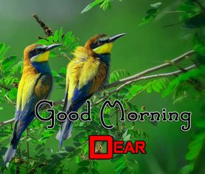 Best Good Morning Wallpaper Pics 4