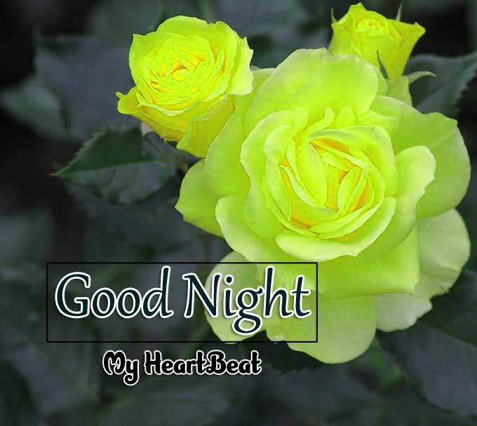 Best Good Night Hd Free Wallapper