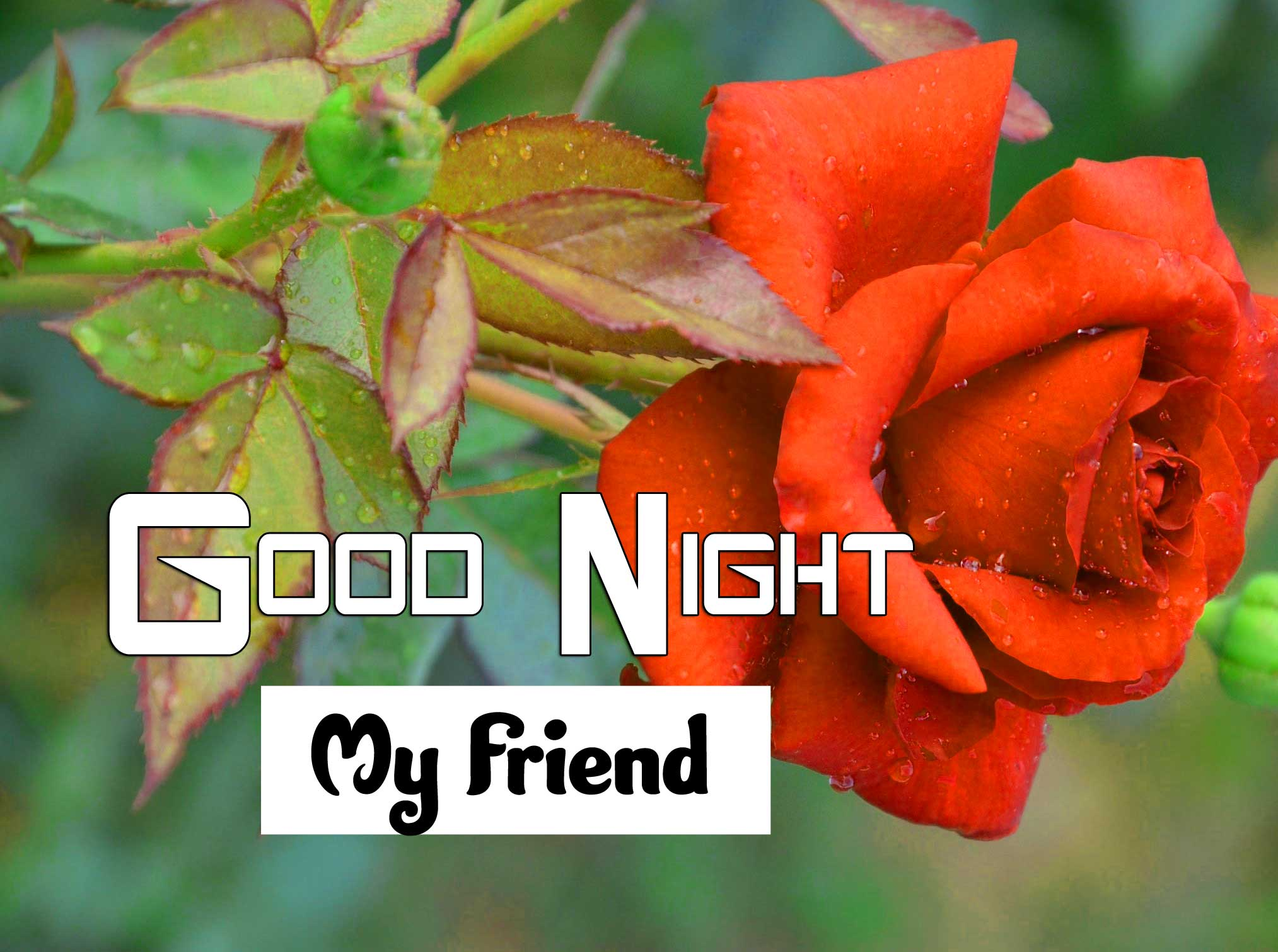 Best Good Night Hd Pictures