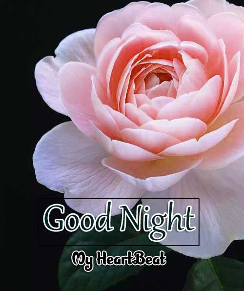 Best Good Night Images HD Download