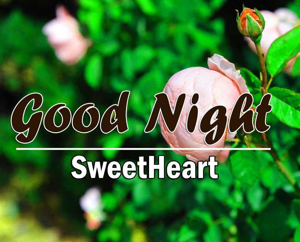 Best Good Night Images Pictures 2