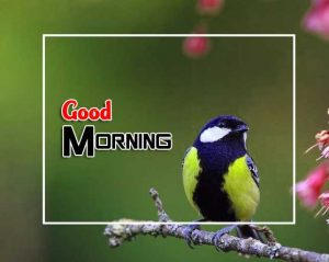 Cute Good Morning Images Photo 1