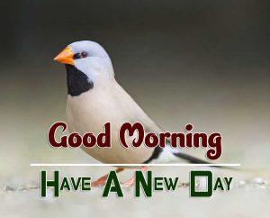 Free Good Morning Photo Images 3