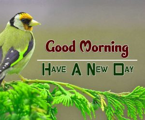 Free Good Morning Pictures Photo