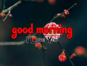 Good Morning Images Download 4