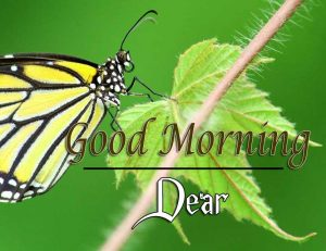 Good Morning Images Pictures