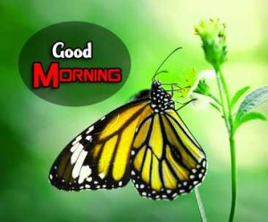 Good Morning PIcs Hd