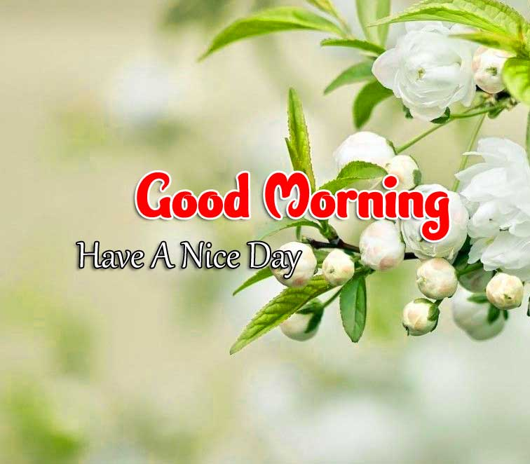 Hd Good Morning Images Hd FRee 3