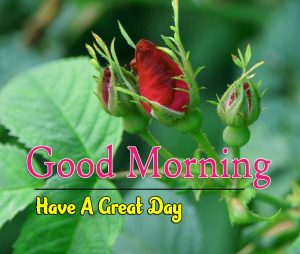 Hd Good Morning Images Pictures 1