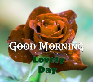 Hd Good Morning Photo Images 5
