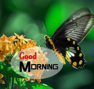 Hd Good Morning Pics Photo