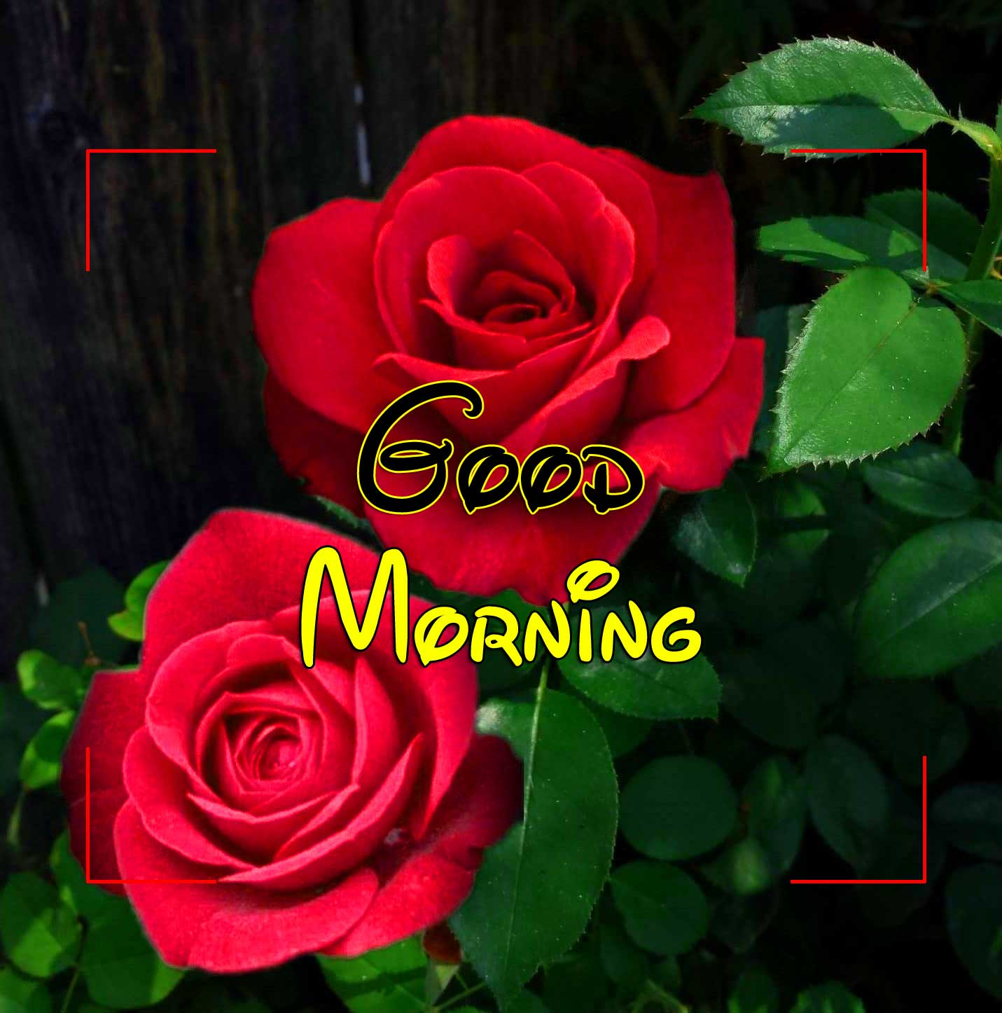 Latest Good Morning Download Hd 1