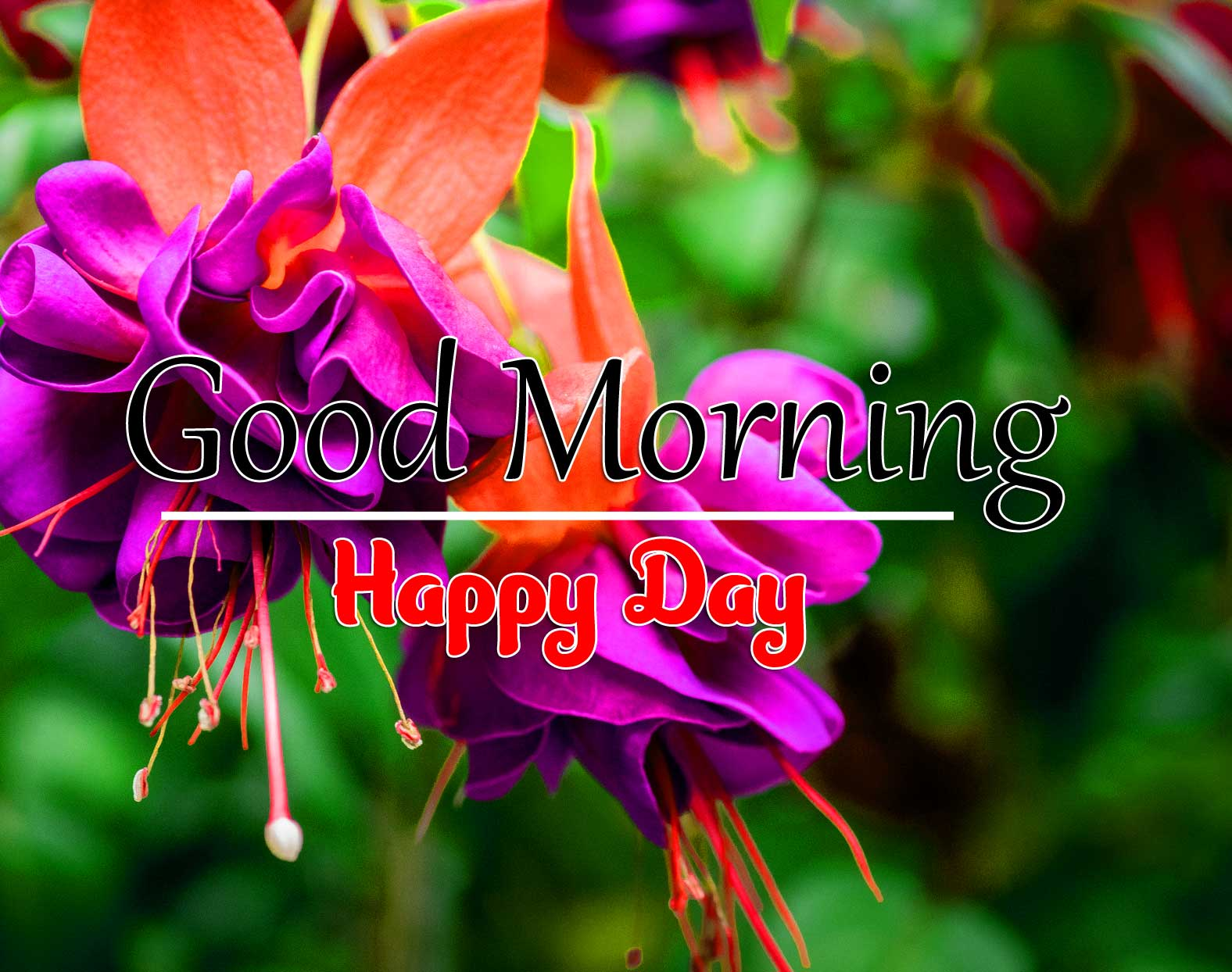 Latest Good Morning Images Download 10