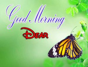 Latest Good Morning Images Download 14