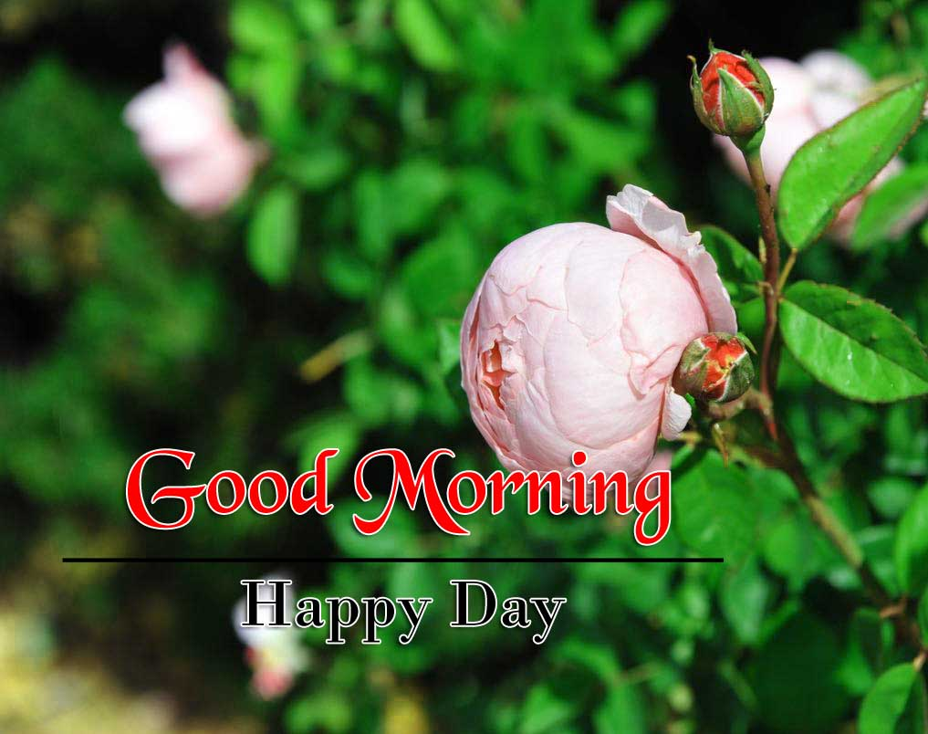 Latest Good Morning Pics 1