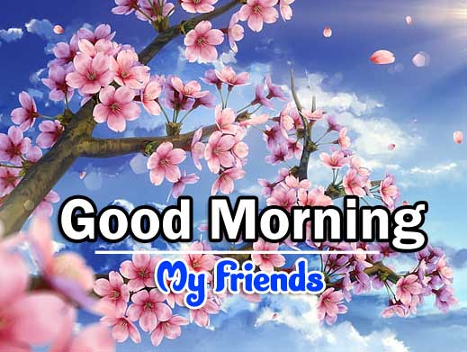 Latest Good Morning Pics Wallpaper 2