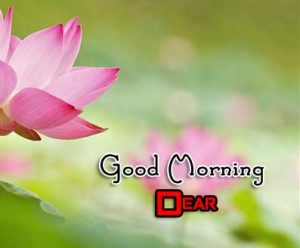 Latest Good Morning Wallpaper Images 10