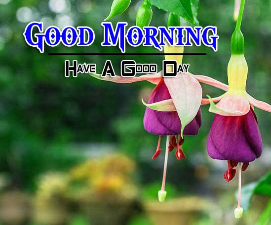 Latest Good Morning Wallpaper Photo 2