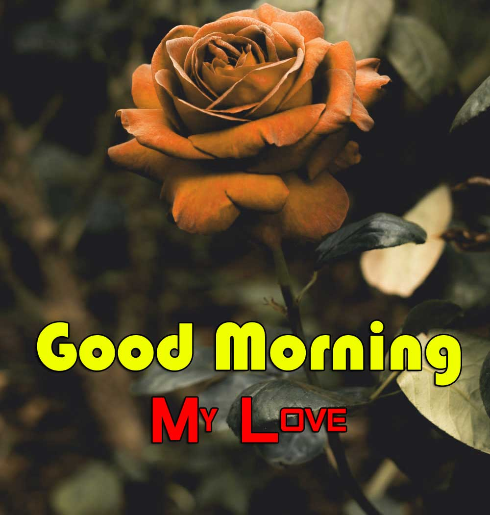 Latest Good Morning Wallpaper Pics 2