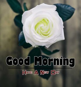 New Good Morning Download Images 11