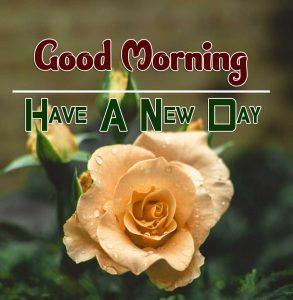 New Good Morning Download Wallpaper