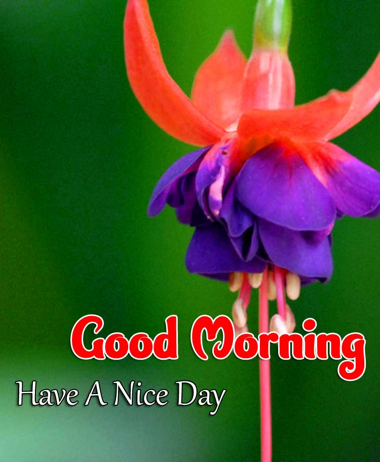 New Good Morning Images Download 2
