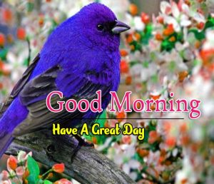 New Good Morning Images Download 6