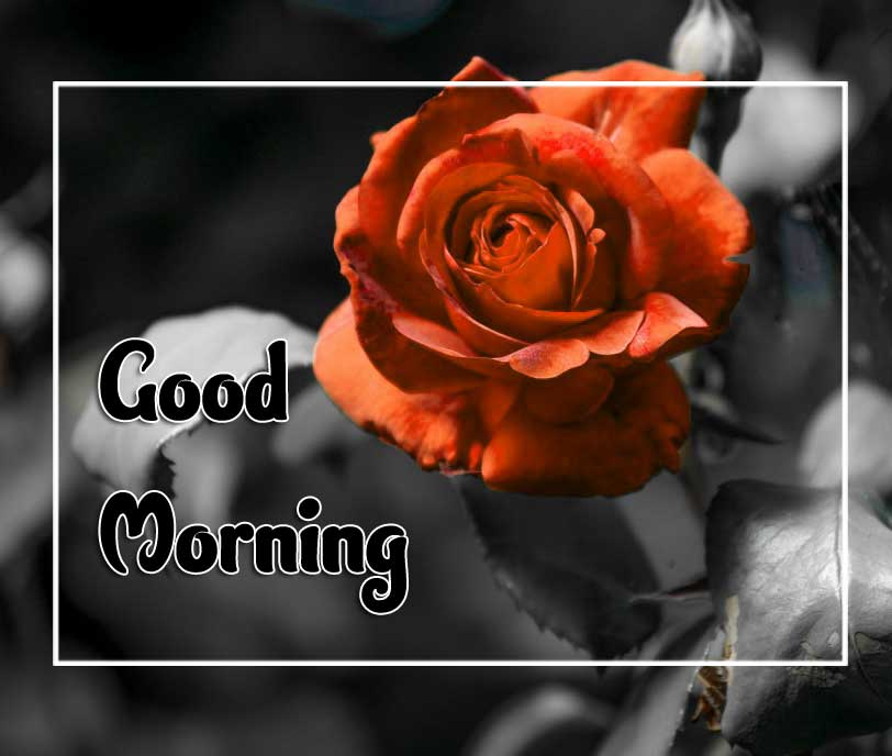 New Good Morning Images Free