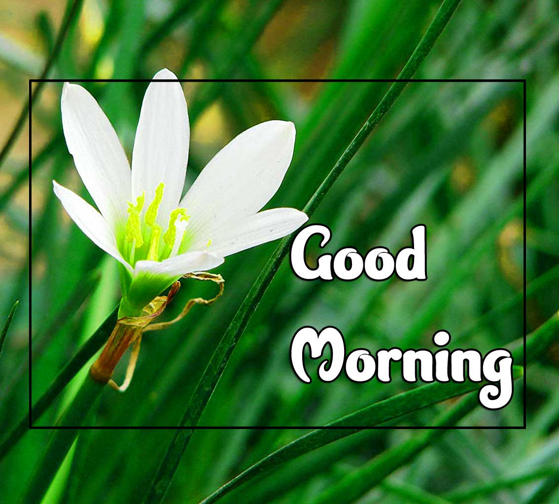 New Good Morning Images Hd 1