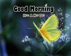 New Good Morning Images Pics 13