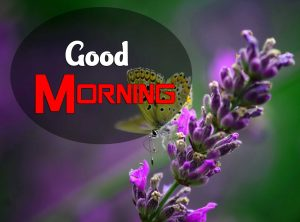 New Good Morning Images Wallpaper 10