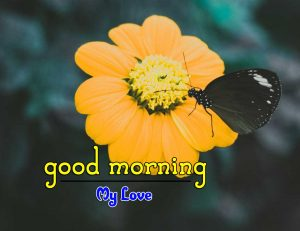 New Good Morning Photo Download 4