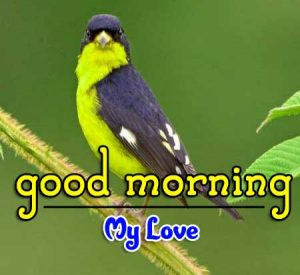New Good Morning Photo Pictures 2