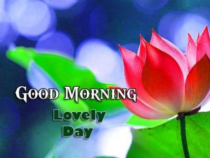 New Good Morning Pics Images 11