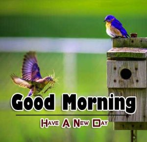 New Good Morning Pictures Images 13