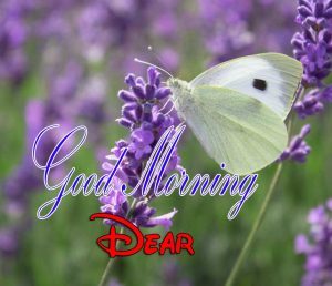 Top Good Morning Download HD Free Images