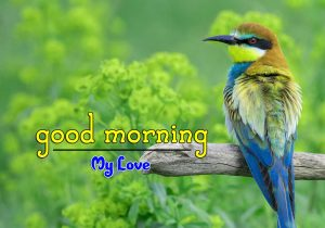Top Good Morning Images Hd Free