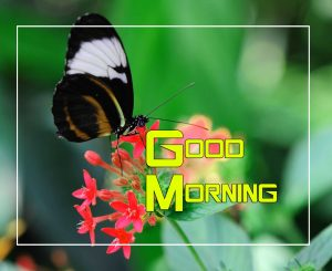 Top Good Morning Images Photo 3