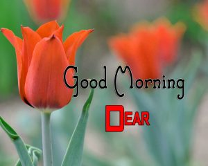 Top Good Morning Photo Hd Free 1