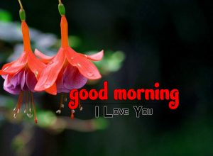 Top Good Morning Photo Images 4