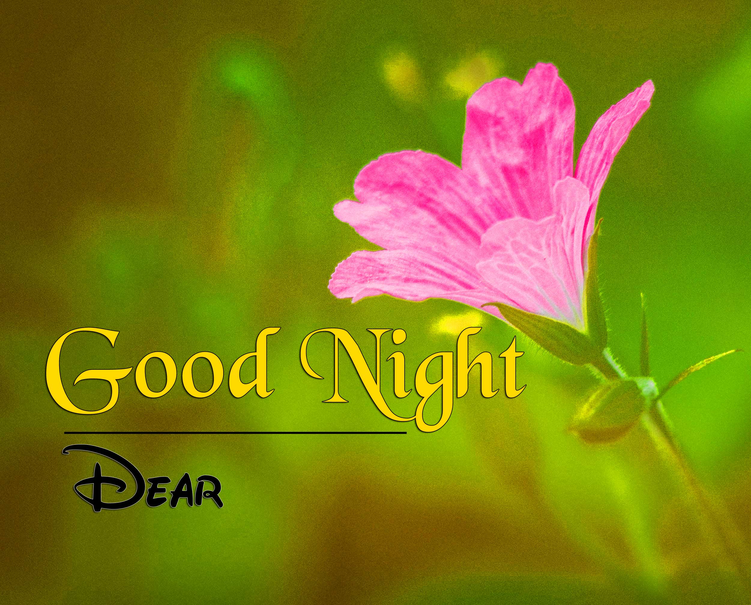 Top Good Night Wallpaper Photo