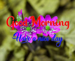 All Good Morning Photo Download 4