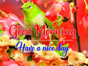 All Good Morning Photo Download 5