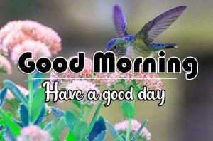 All Good Morning Photo Free