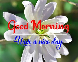 All Good Morning Photo for Whatsapp 2