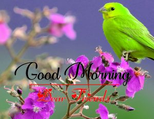 All Good Morning Pics Images With Bird