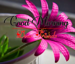 All Good Morning Pics images HD