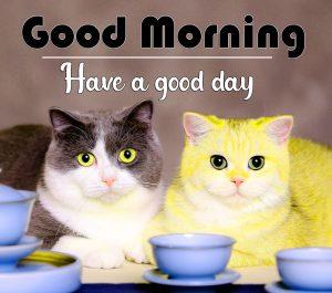 All Good Morning Wallpaper