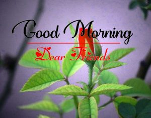 All Good Morning Wallpaper Photo Download